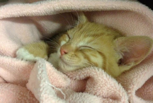 kitten - riverside vets livingstone bathgate