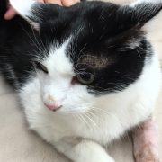 cat at vets riverside