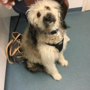 dog in vets surgery bathgate and livingston
