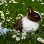 Rabbit in a field