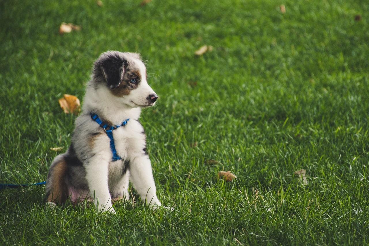 Puppy sitting in a grass field